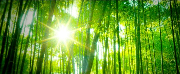 bambou écolo?